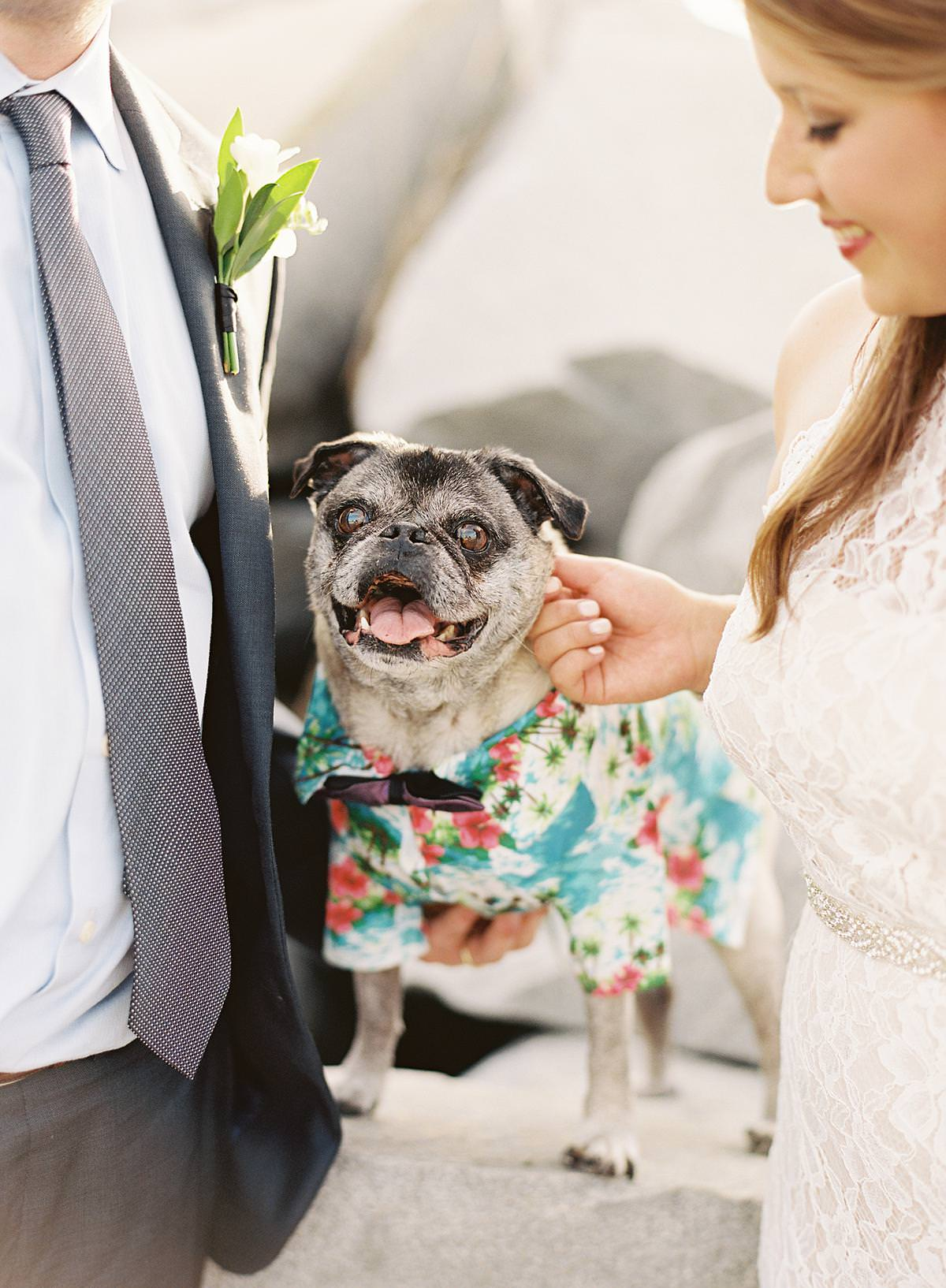 wedding dog in hawaiian shirt
