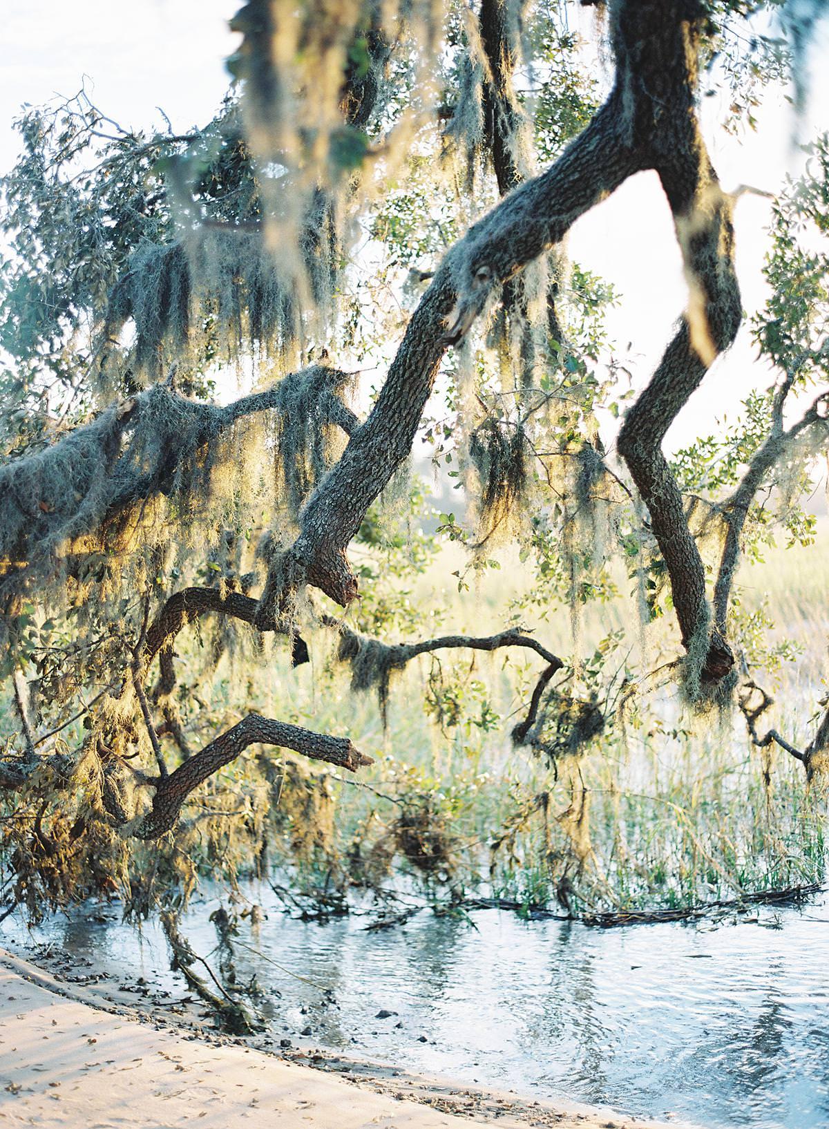 hilton head spanish moss