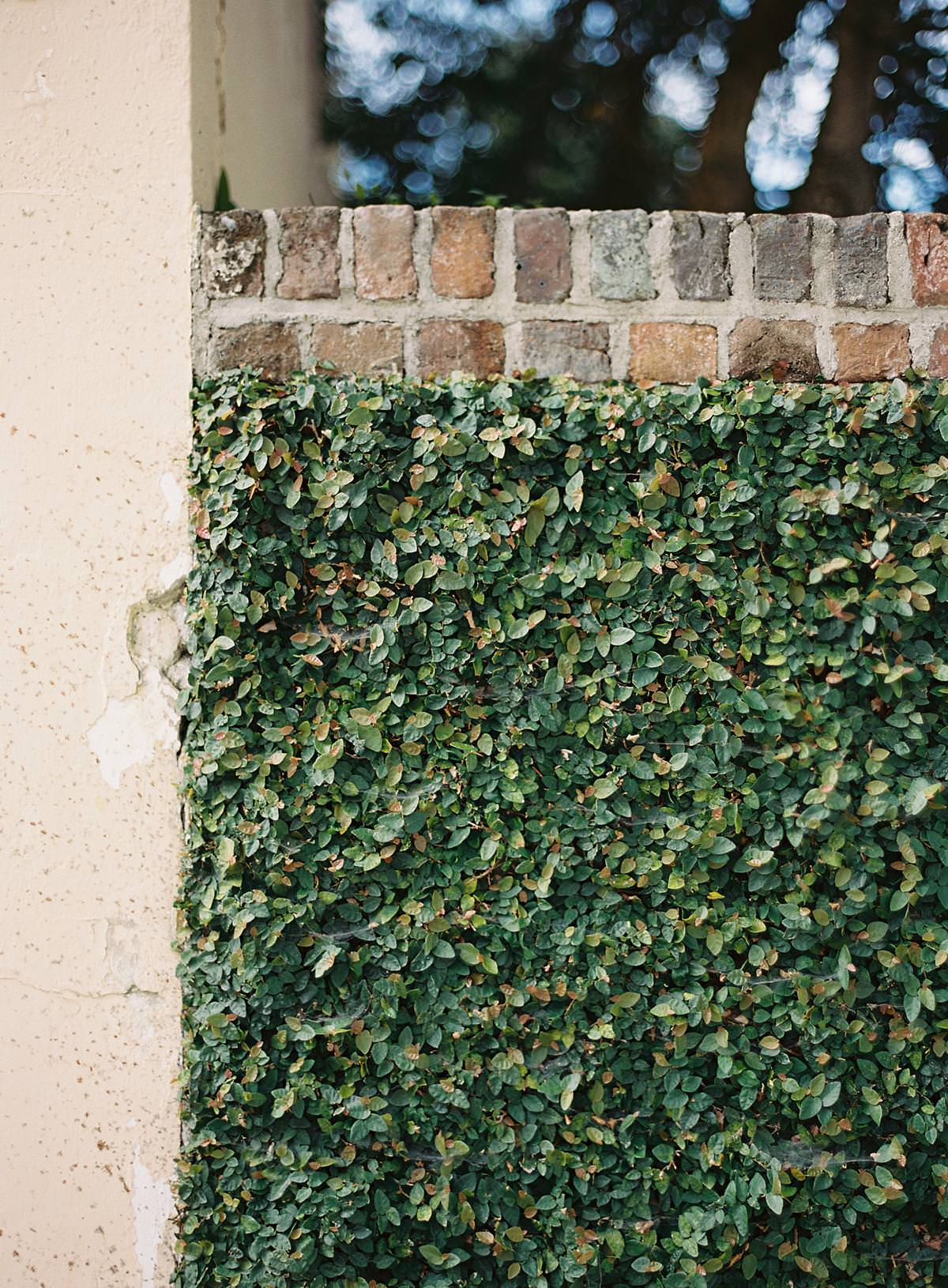 ivy on brick wall in charleston