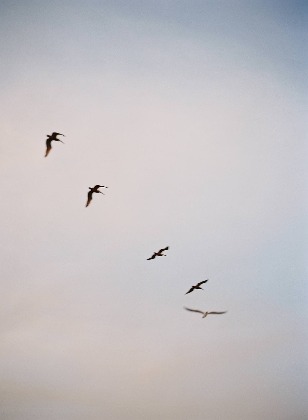 birds flying on film